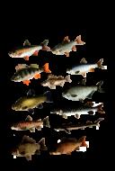 Принт Энциклопедия рыбака вариант 1